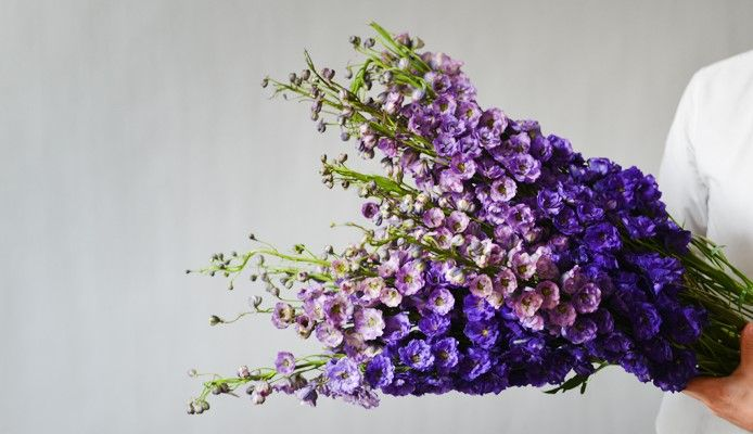 Bouquet de Delphiniums