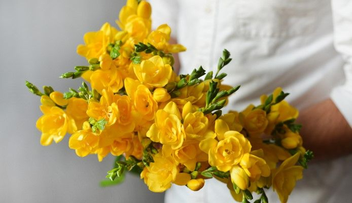 Bouquet de Freesias jaunes