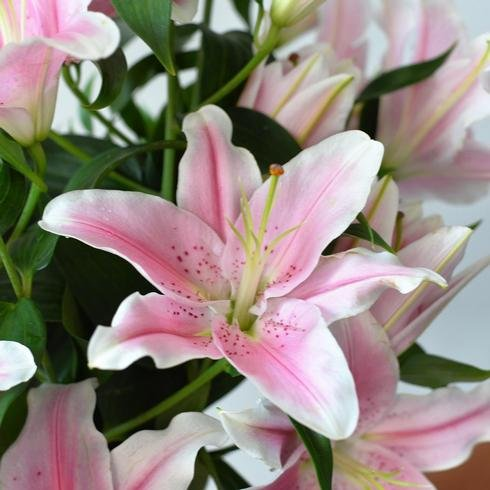 Sorbonne Lilies With Ruscus2